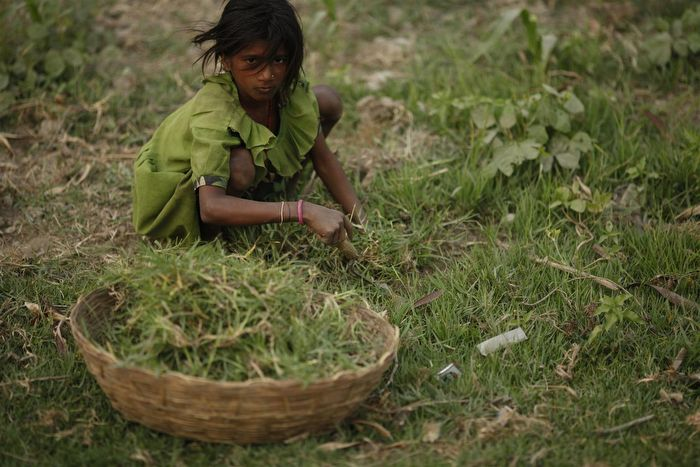 thesis on child labor in nepal