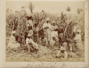 Jamaican men and women working on a plantation