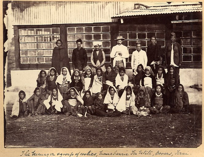 Workers and manager of a tea estate, eastern Himalayas, 1880s