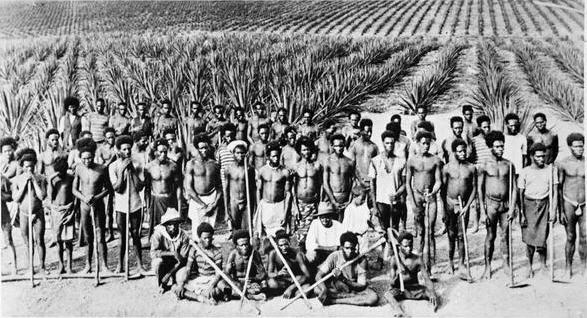South Sea islander labourers on a Queensland pineapple plantation, 1890s